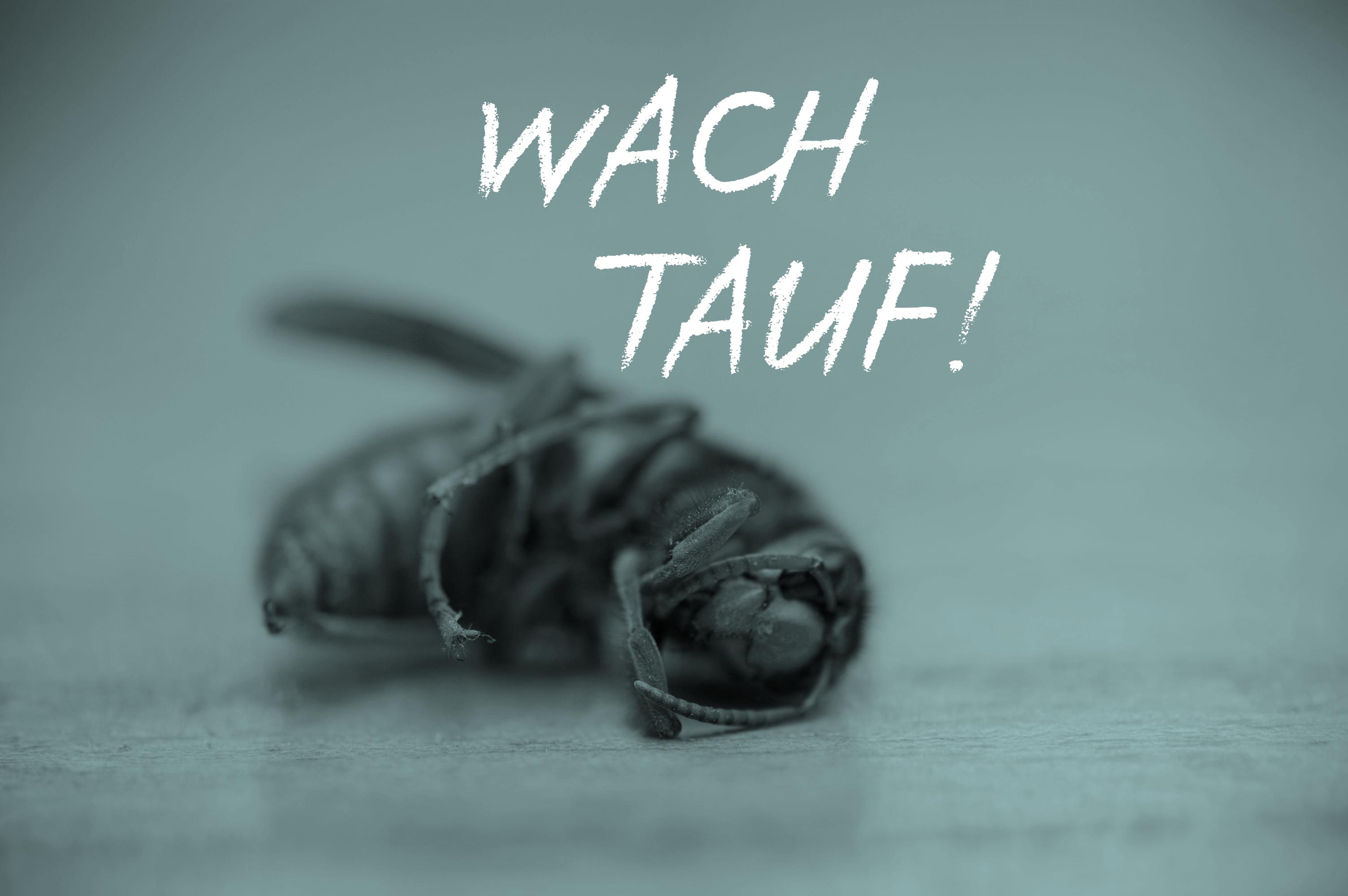 Das Insektensterben Brummt!
