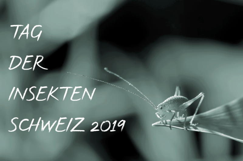 Tag Der Insekten Schweiz 2019 Insect Respect
