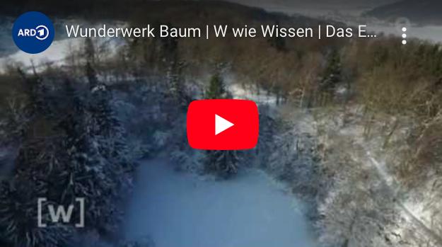 Das Buero der lebendigen Baeume, papierloses Buero Megatrend Digitalisierung Umwelt Video Wunderwerk Baum W wie Wissen ARD