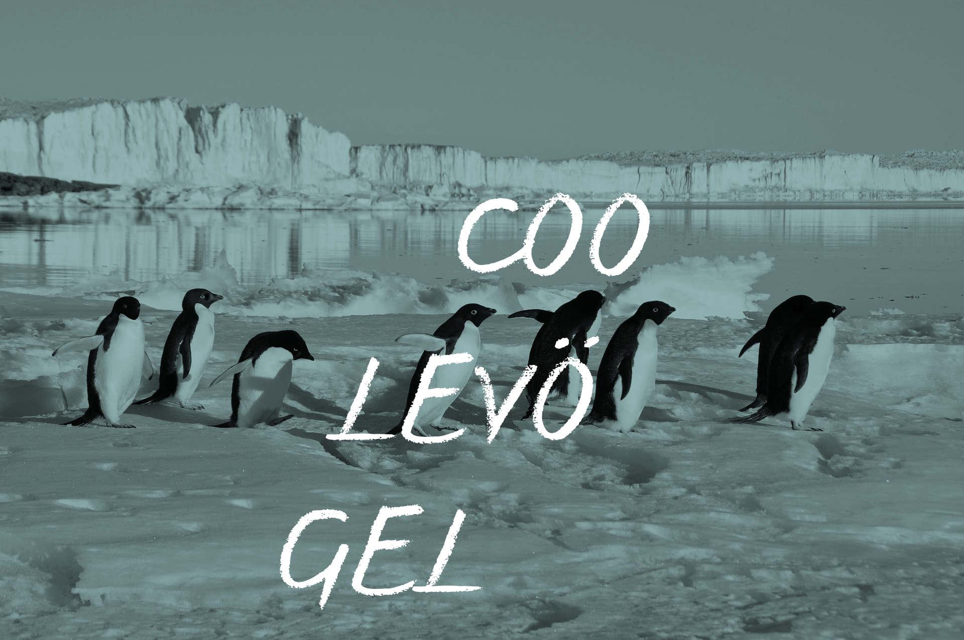 Pinguine In Einer Reihe. Text: Coole Vögel.