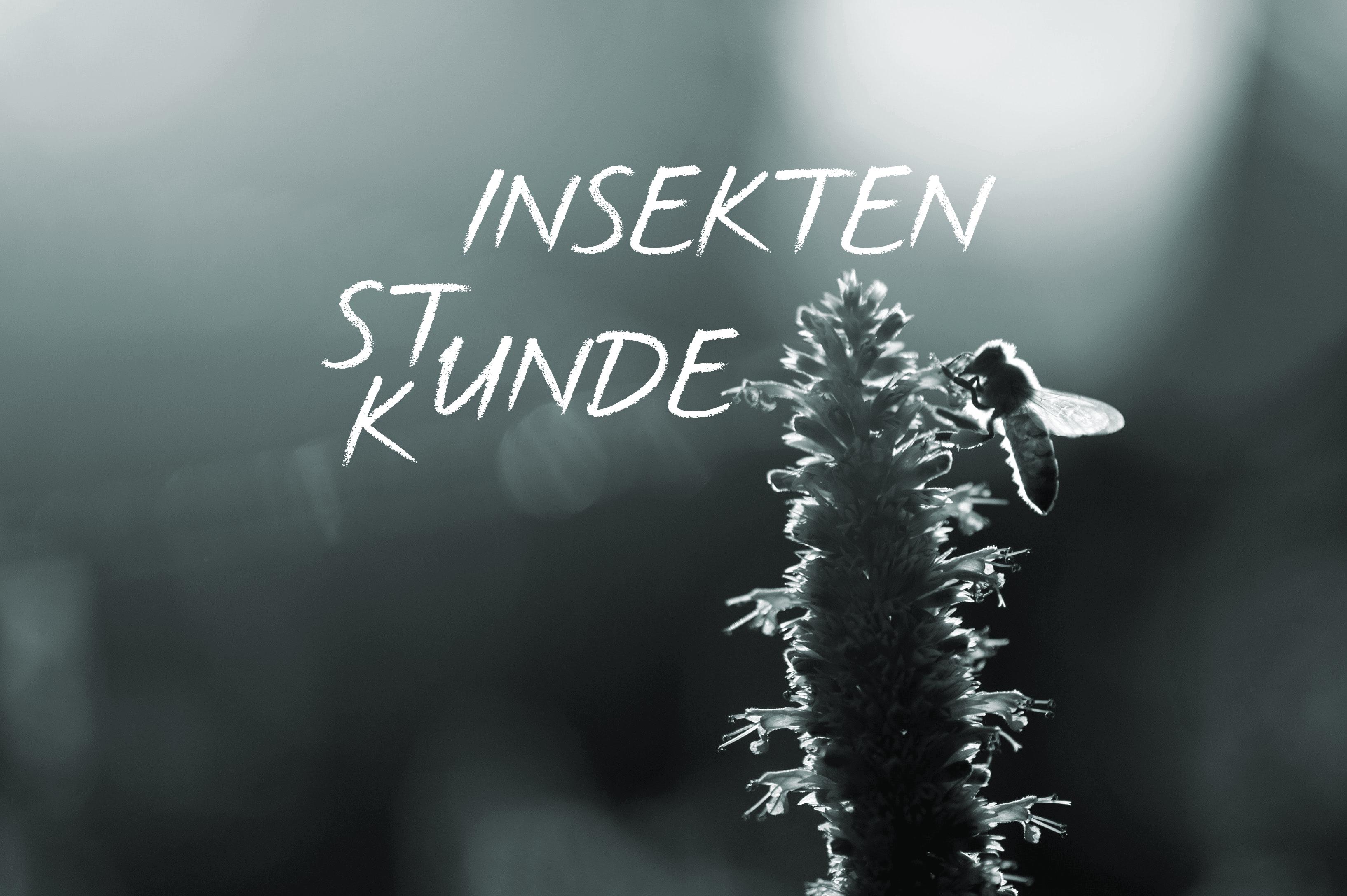 Blume Mit Insekt. Text: Stunde / Kunde Der Insekten.