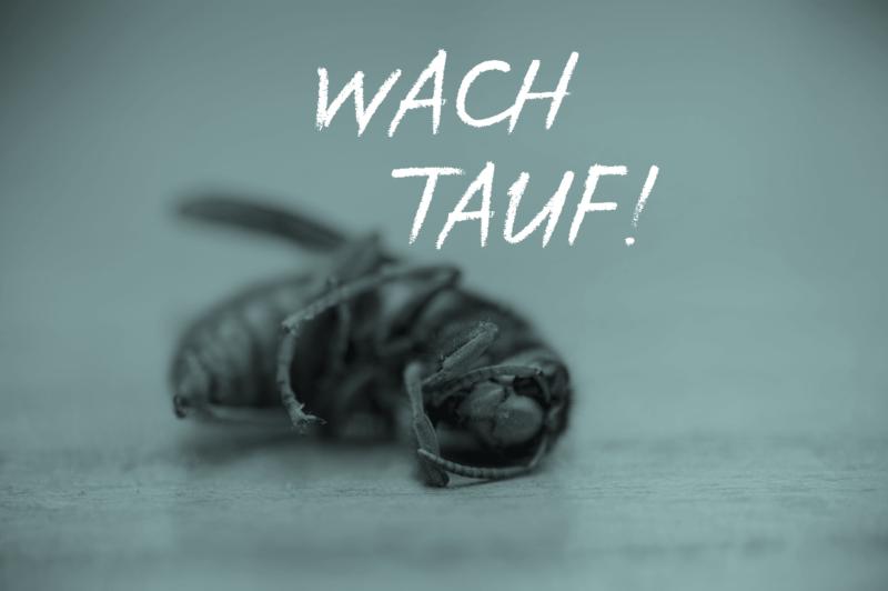 Das Insektensterben Brummt! Tina Teucher Wach Auf! Insekten Wespe Fliege Biene